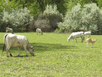 Summer Extension Grass-Fed Beef Share