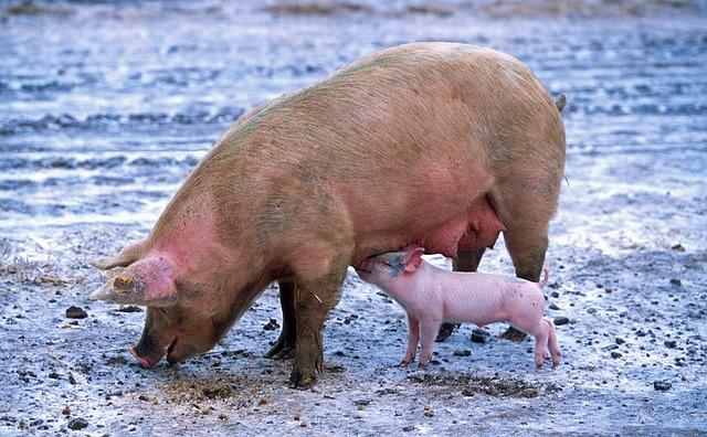 Summer Extension Pastured Pork Share