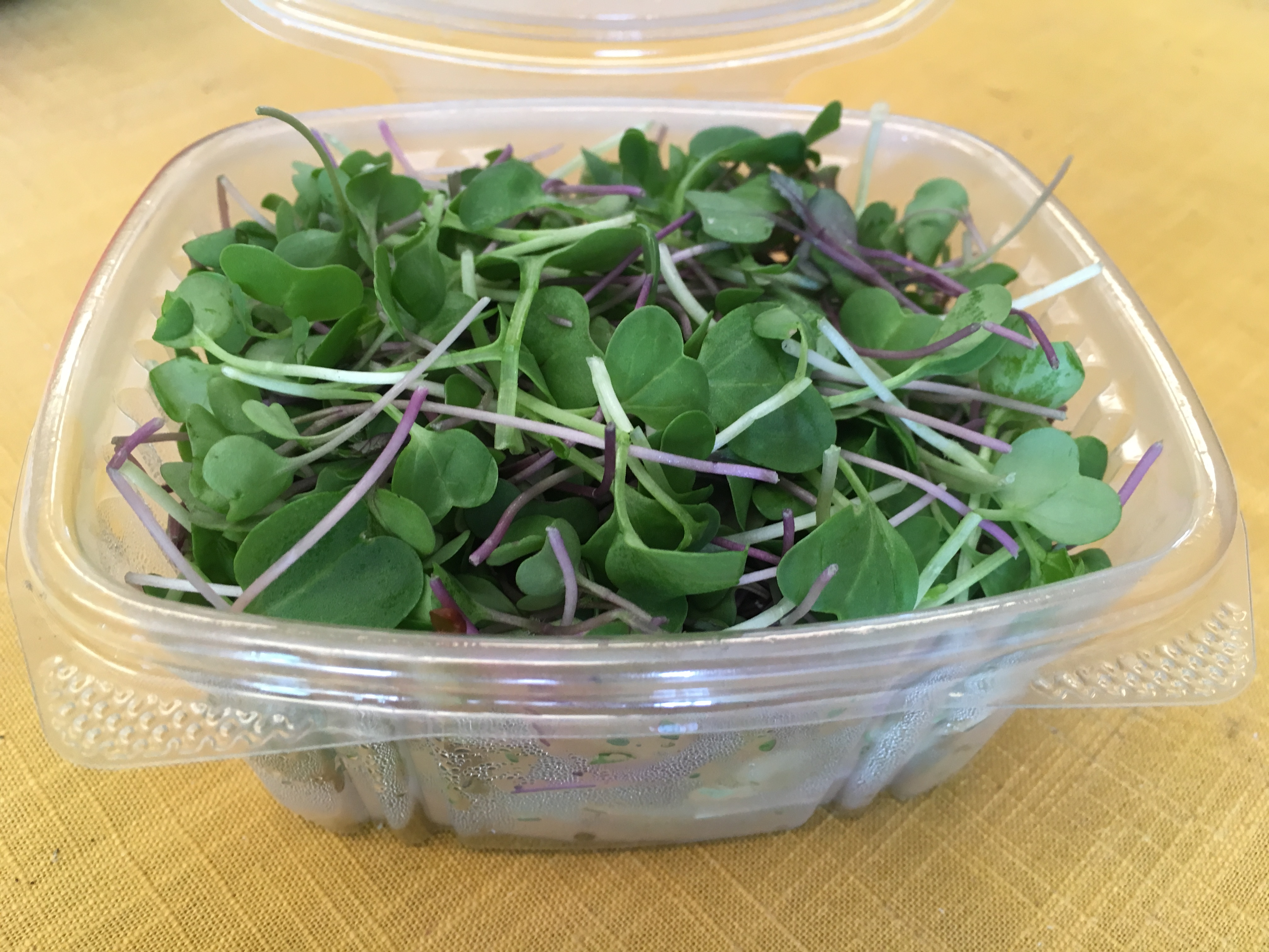 August Microgreen Spicy Mix