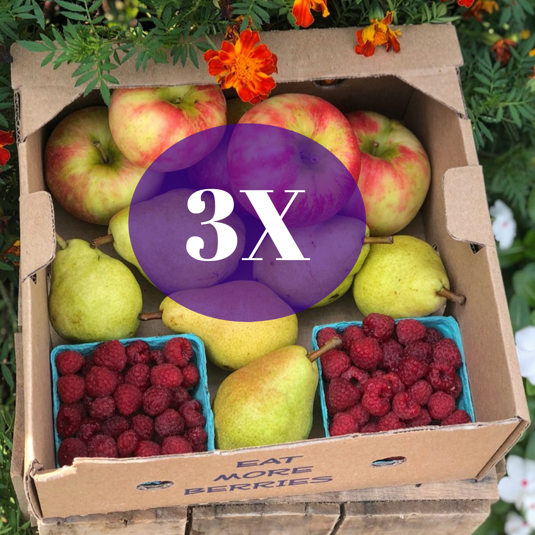 Fall Fruits Triple (12 Units)