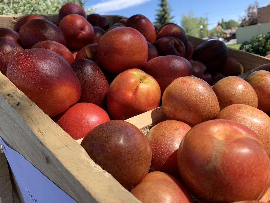 Regular Fruit Share