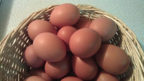 Winter Eggs (1 dozen)