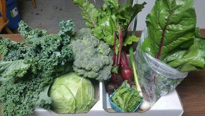 Winter Vegetable Share