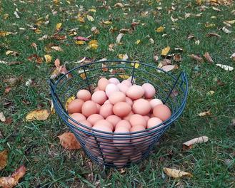 Egg Share, 1 Dozen