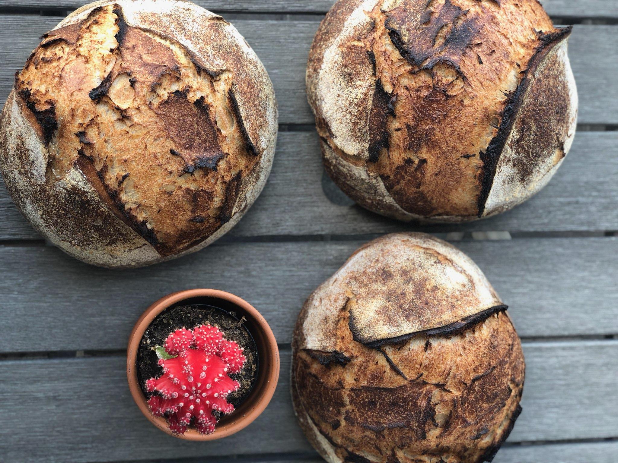 Sourdough from Desert Bread: Sourdough from Desert Bread