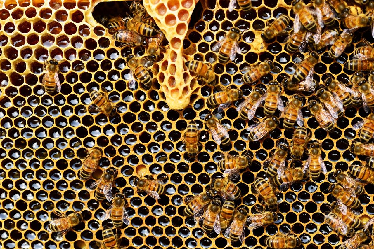 Adopt-a-Hive, Honey Share