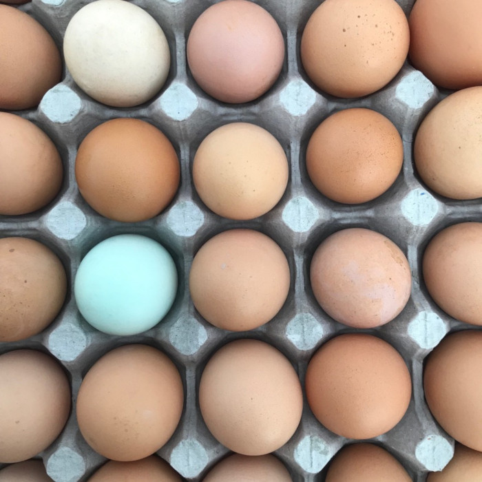 Fall Eggs - 1 dozen