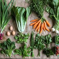 Full Spring Season Vegetables