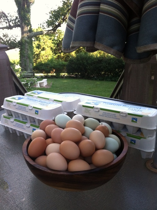 Every-Other-Week Eggs - Main Season