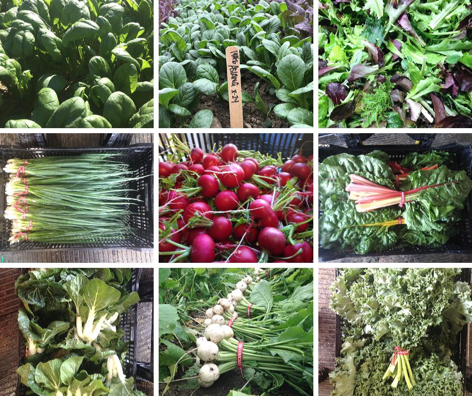 Spring Veggie Share