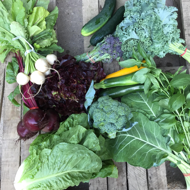 Summer Vegetable Family Share