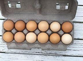 Autumn Organic Egg Share