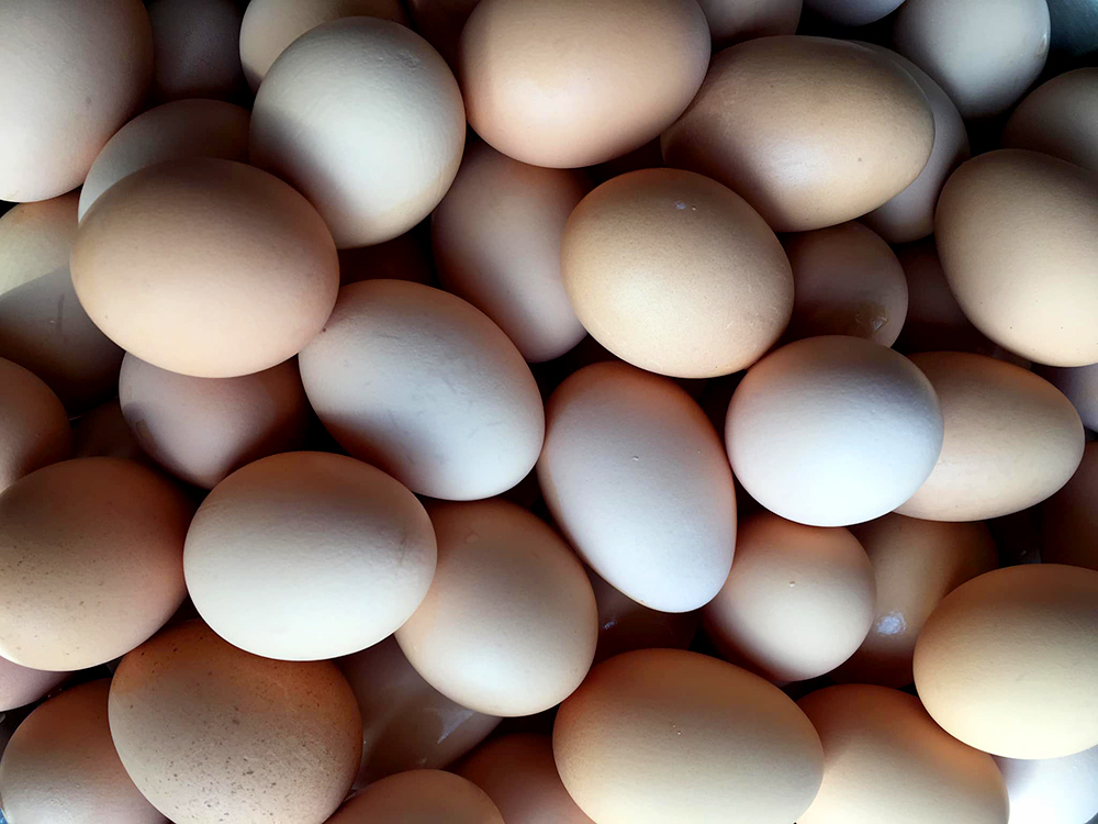 Egg Share: One Dozen Eggs