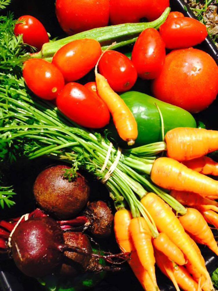 Standard Fall Vegetable Share