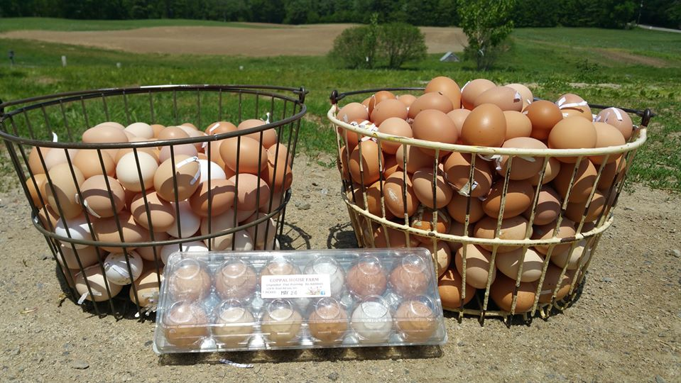 Standard Summer EggShare