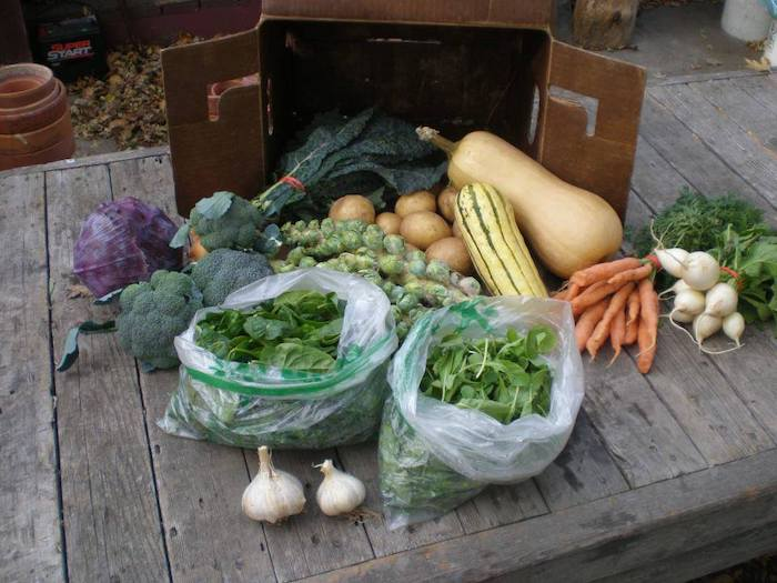 Weekly Fall Full Vegetable Share
