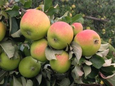 Fall Fruit Share