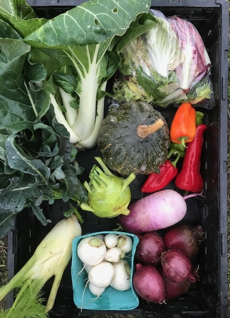 Fall Large Vegetable Share