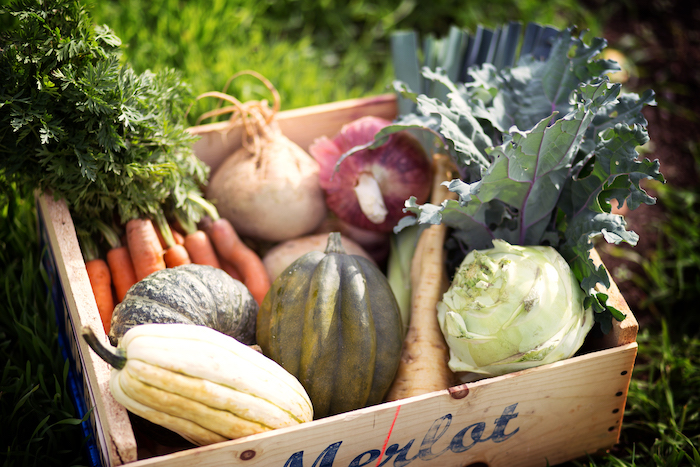Fall Regular Vegetable Share