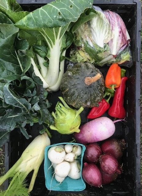 Full Season Large Vegetable Share