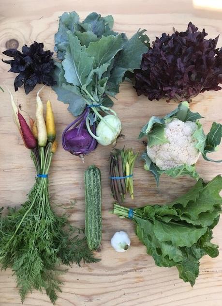 Full Season Small Vegetable Share