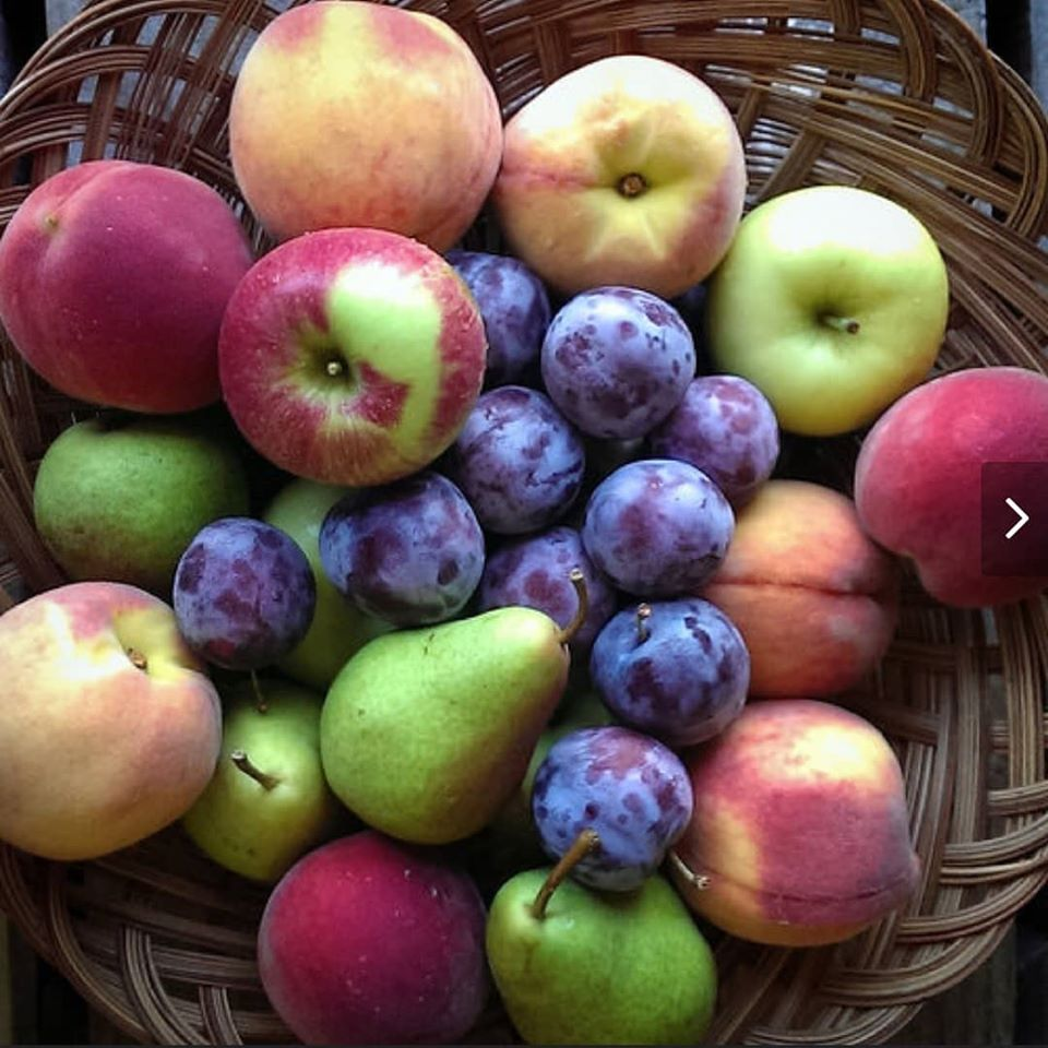 Fruit Share (15-week season,$24 per week, total $360)
