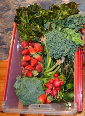 CSA Harvest Box