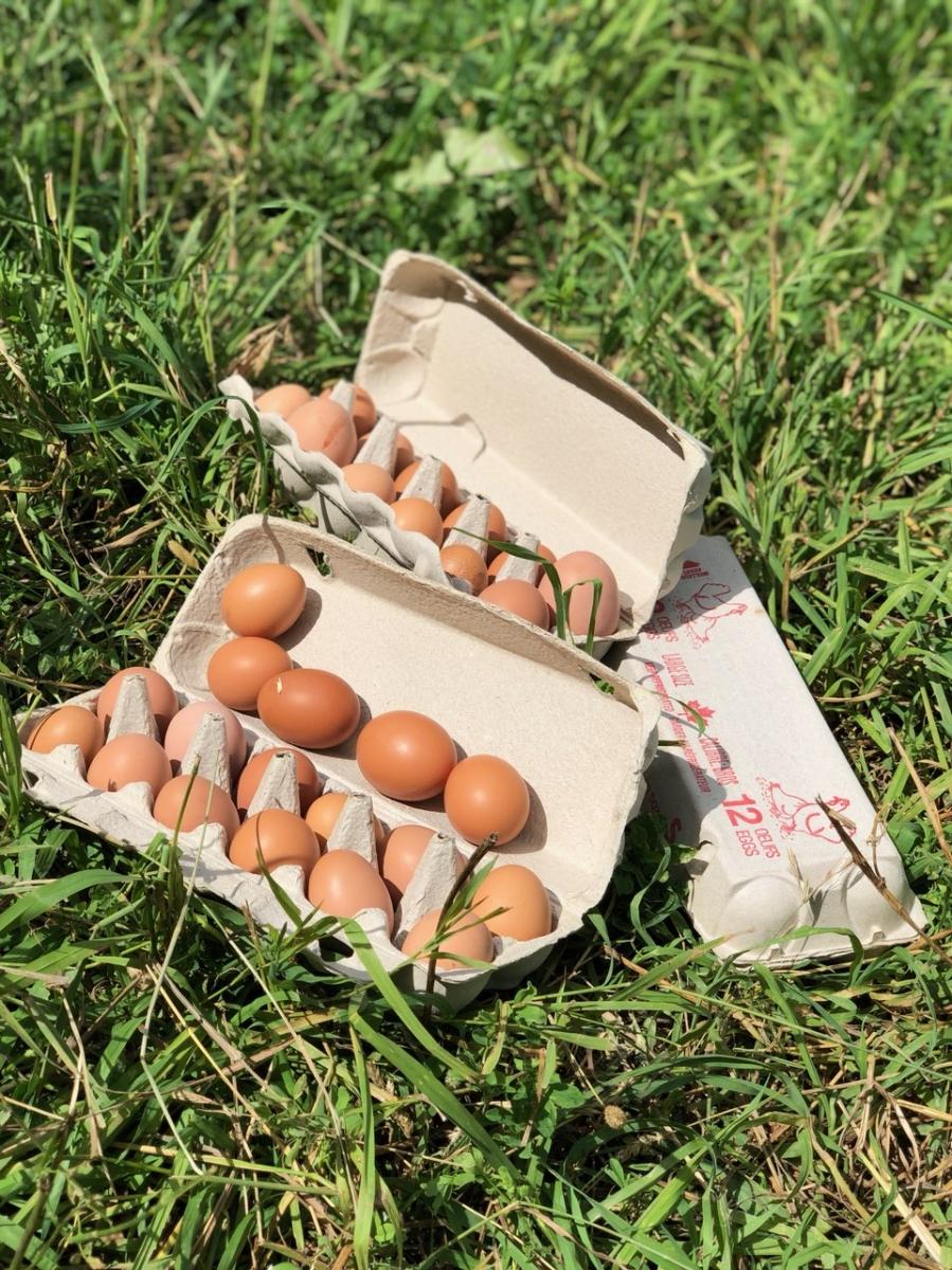 Winter Egg Share