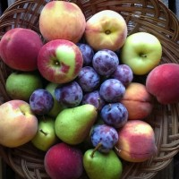 Fruit Share (8 week season, $23/week (total $184))