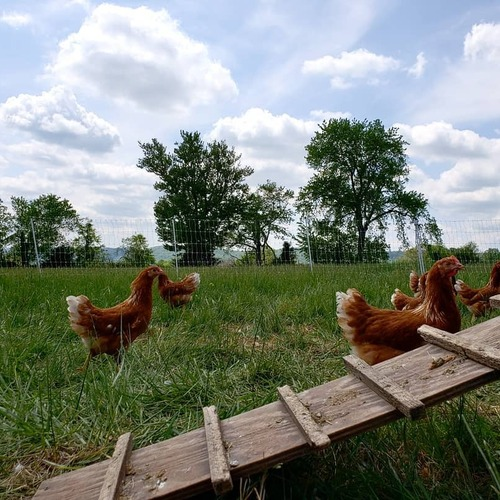 SOLD OUT - Whole Pastured Chickens (FROZEN)