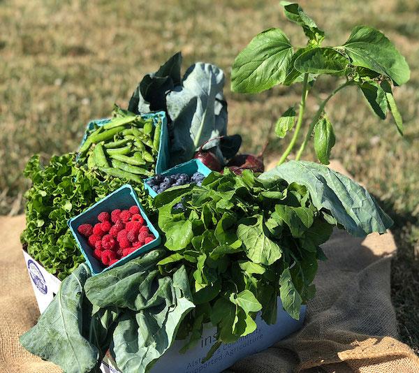 Half (Farmers Harvest Share)
