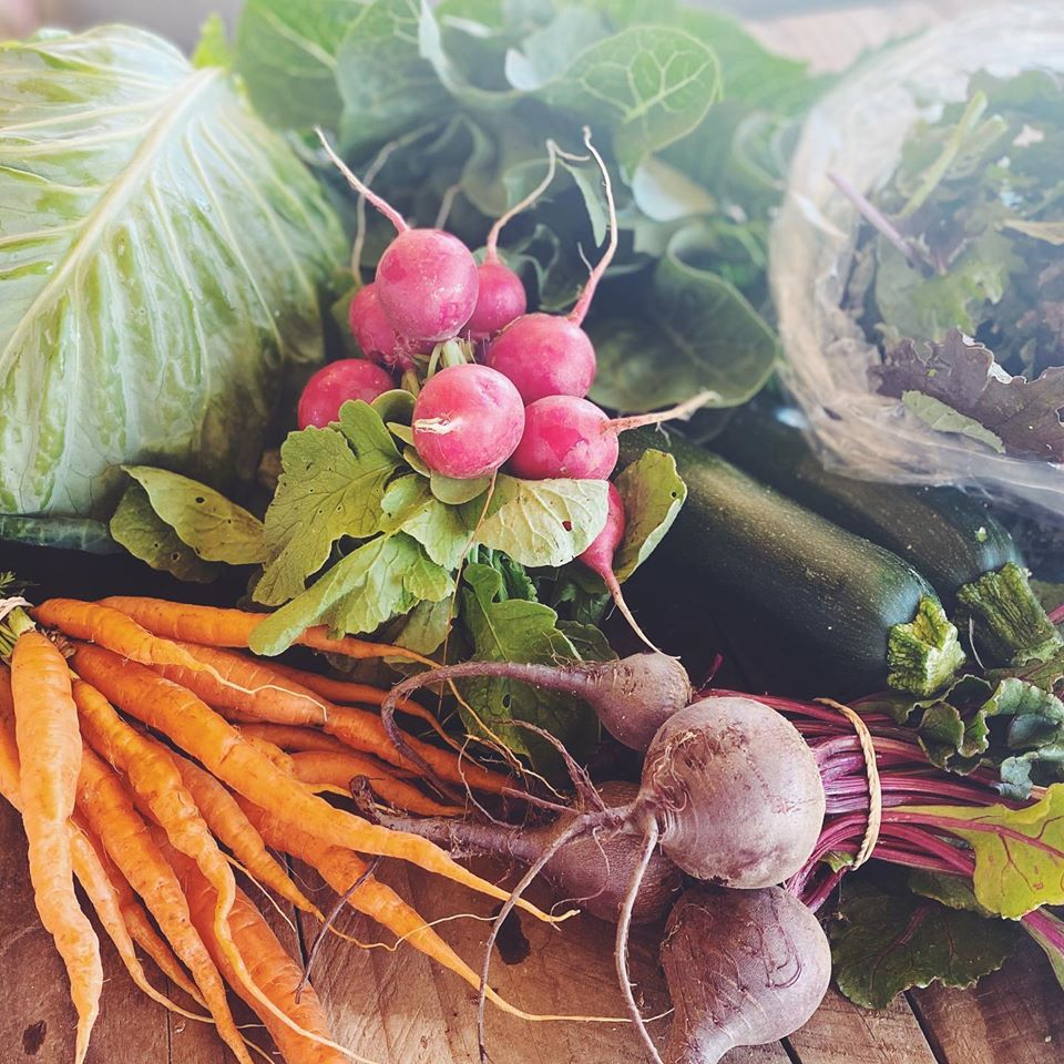Large Fall Vegetable Share