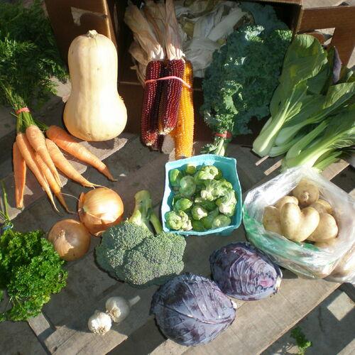 Bi-Weekly Vegetable Share