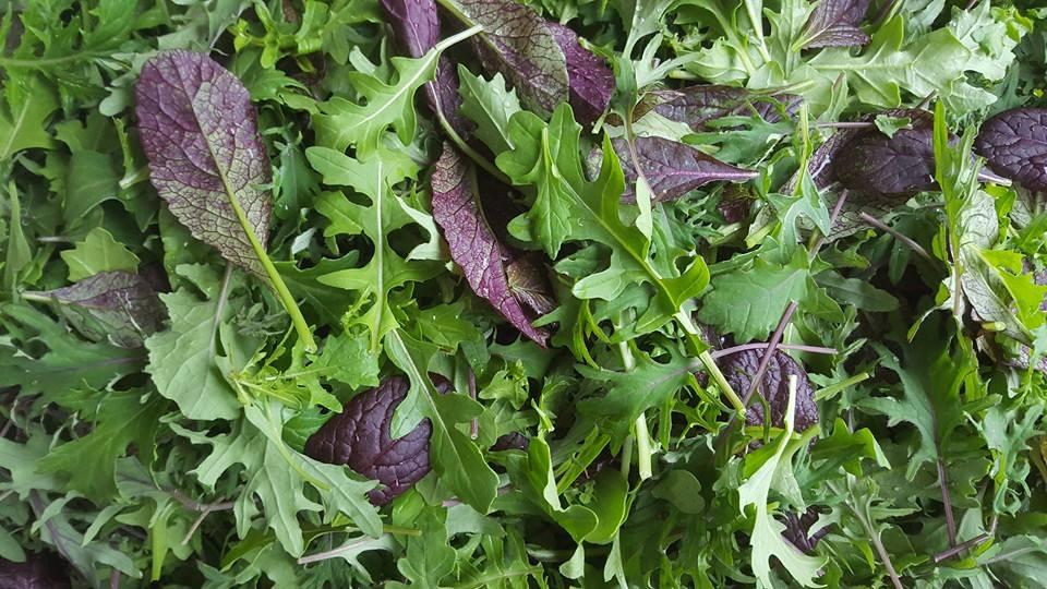 Summer Salad Lover's