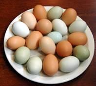 Eggs - Half Dozen