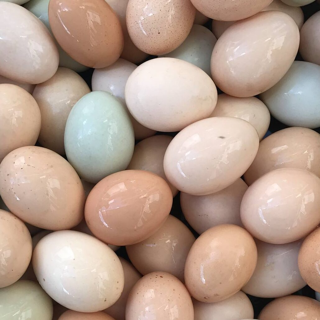 Fall/ Winter One Dozen Eggs