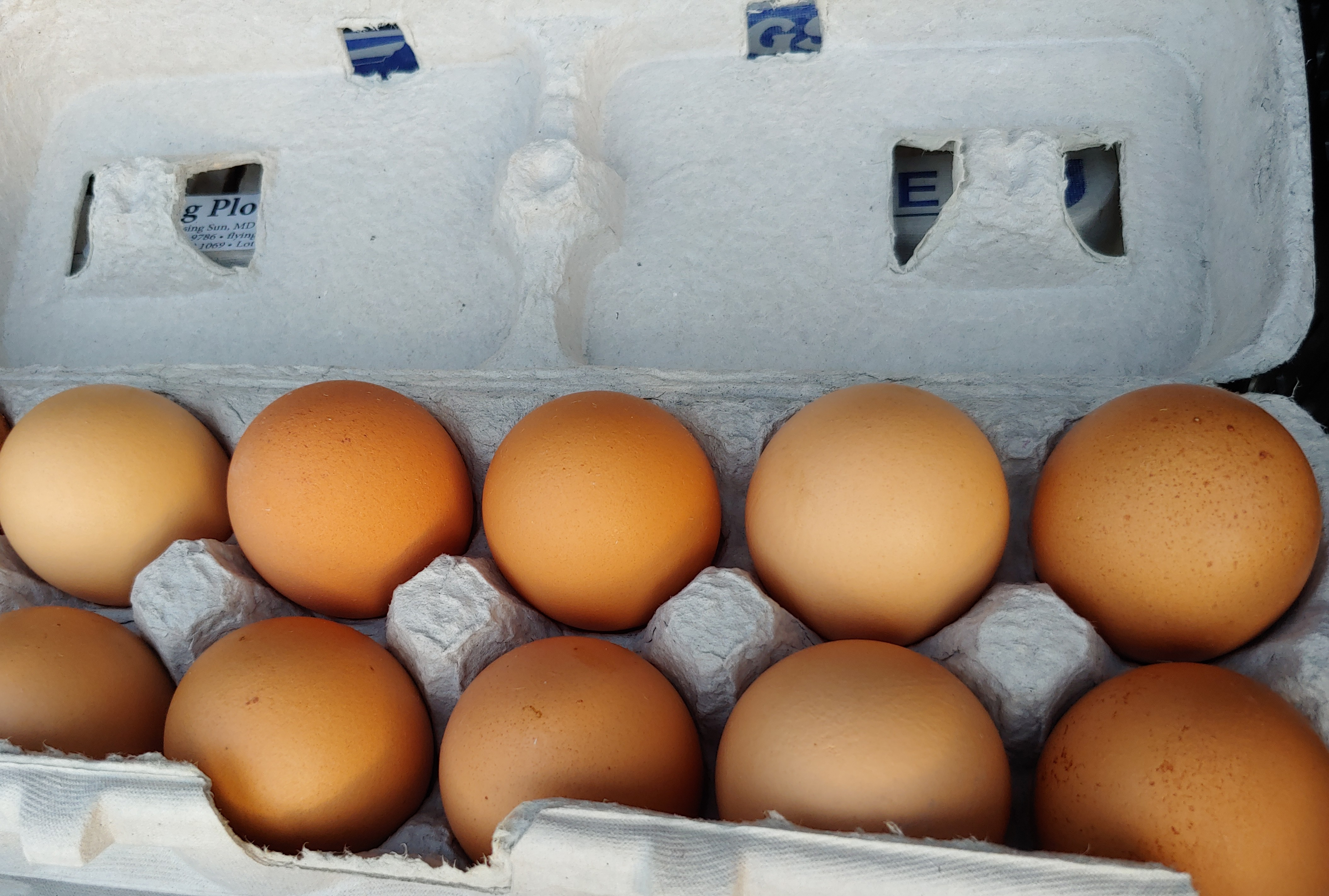 Have It All! One Dozen Eggs