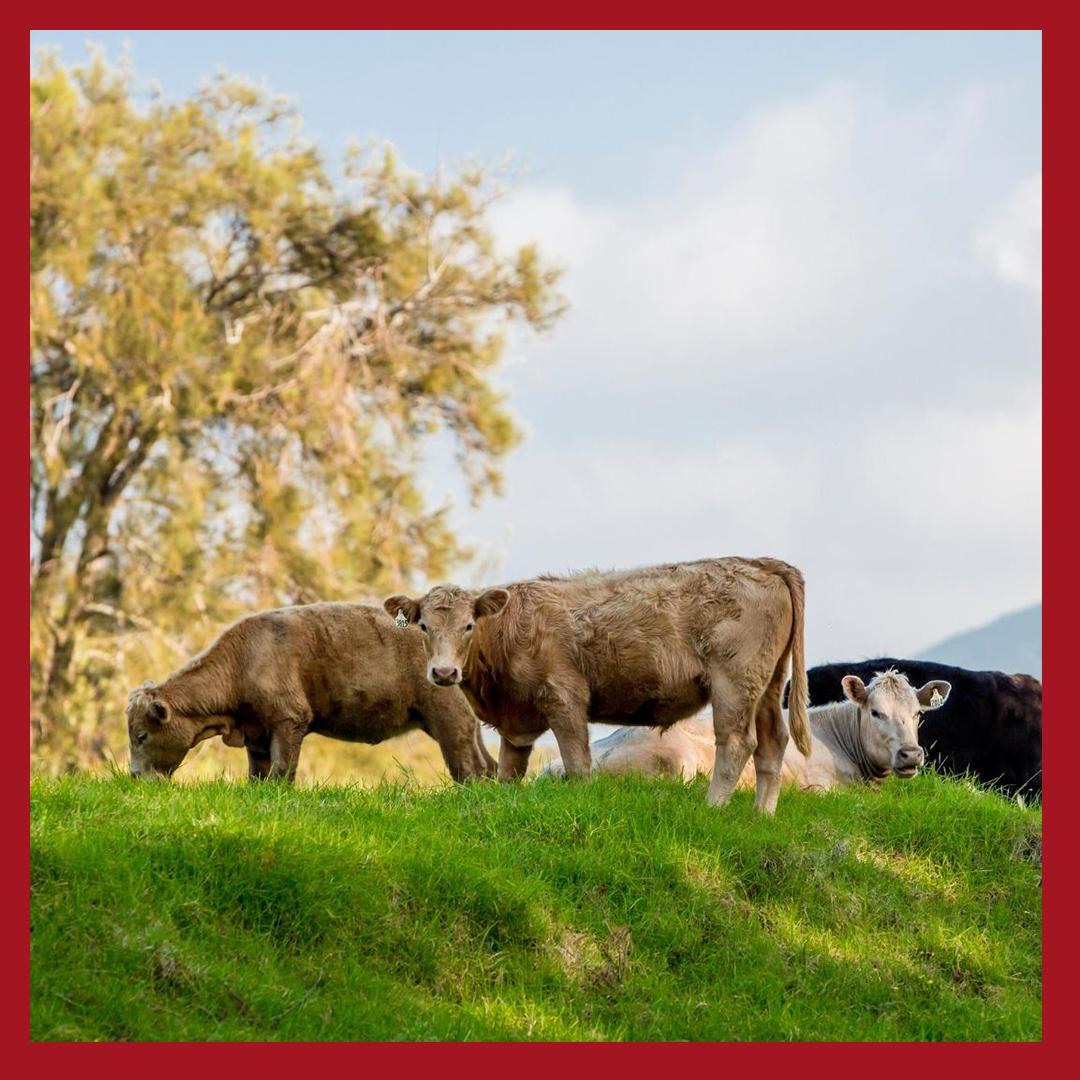Summer Grass-Fed Beef Share