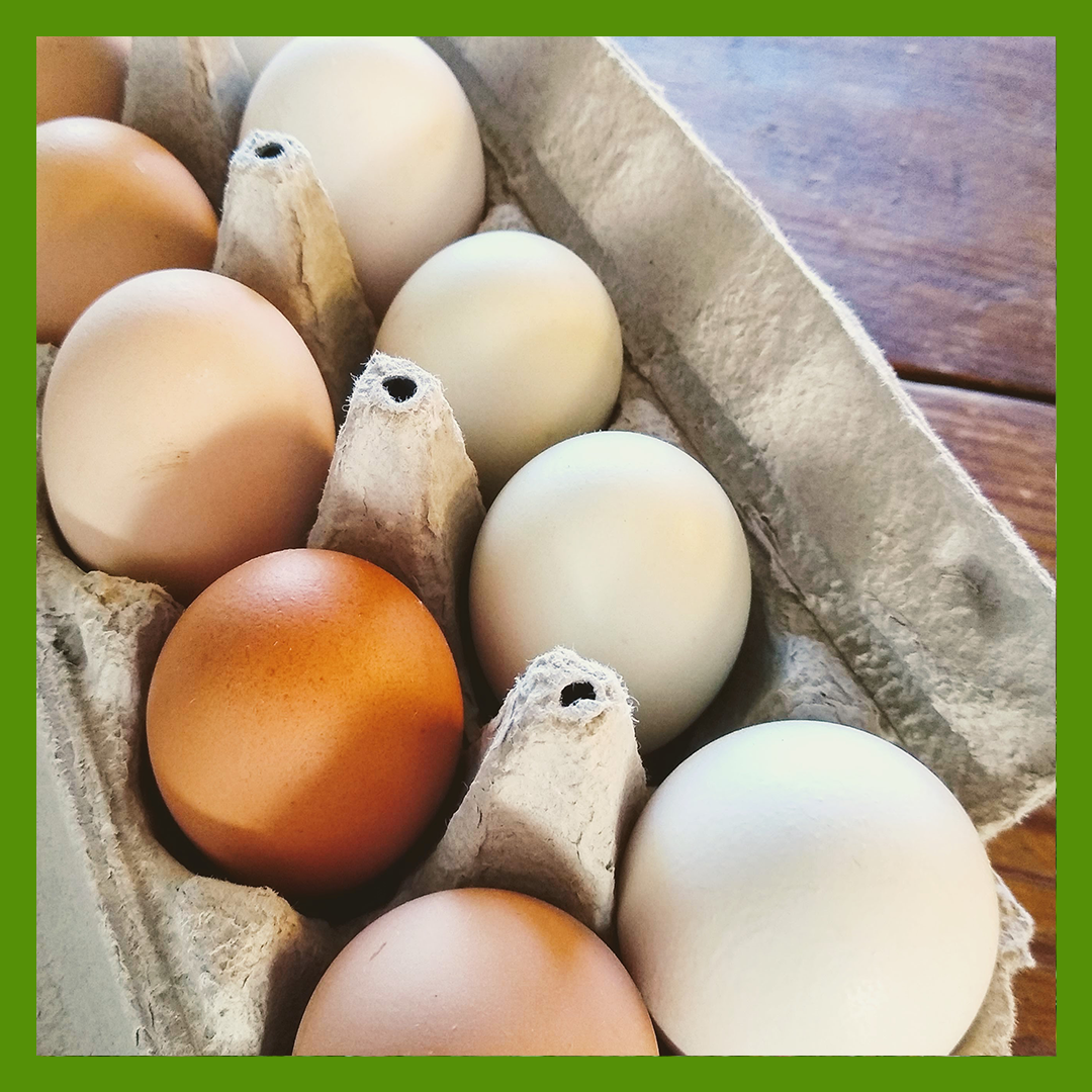 Spring Egg Share (1 dozen)