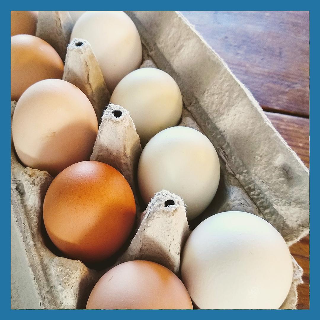 Winter Egg-cellent Egg Share