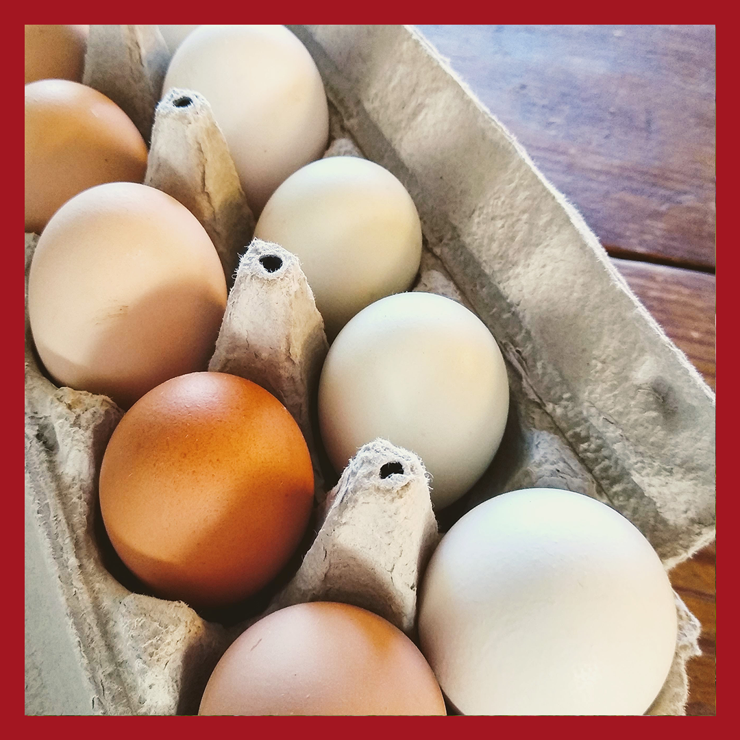 Summer Egg Share (1 dozen)