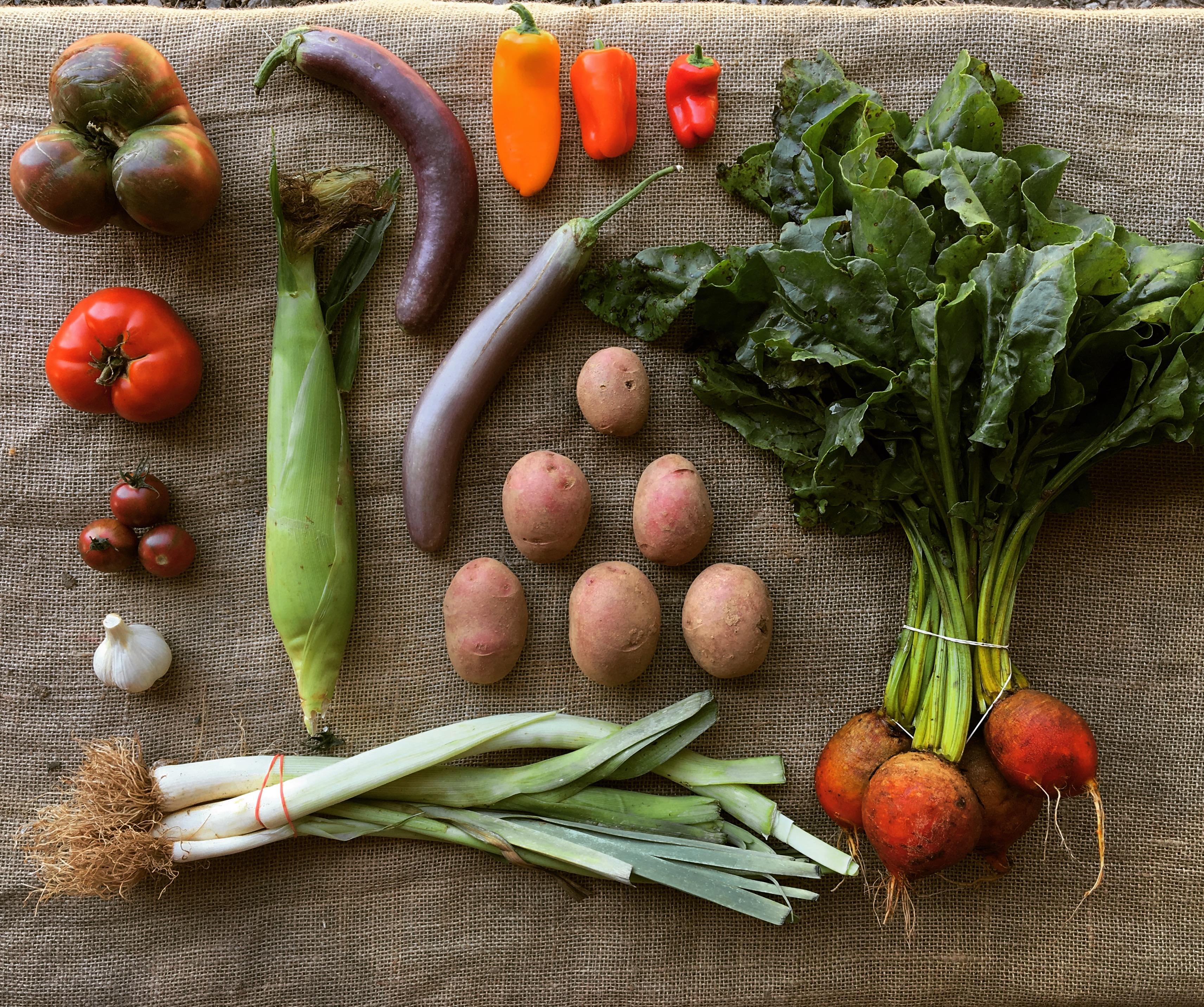 Smaller - Summer Season Vegetable