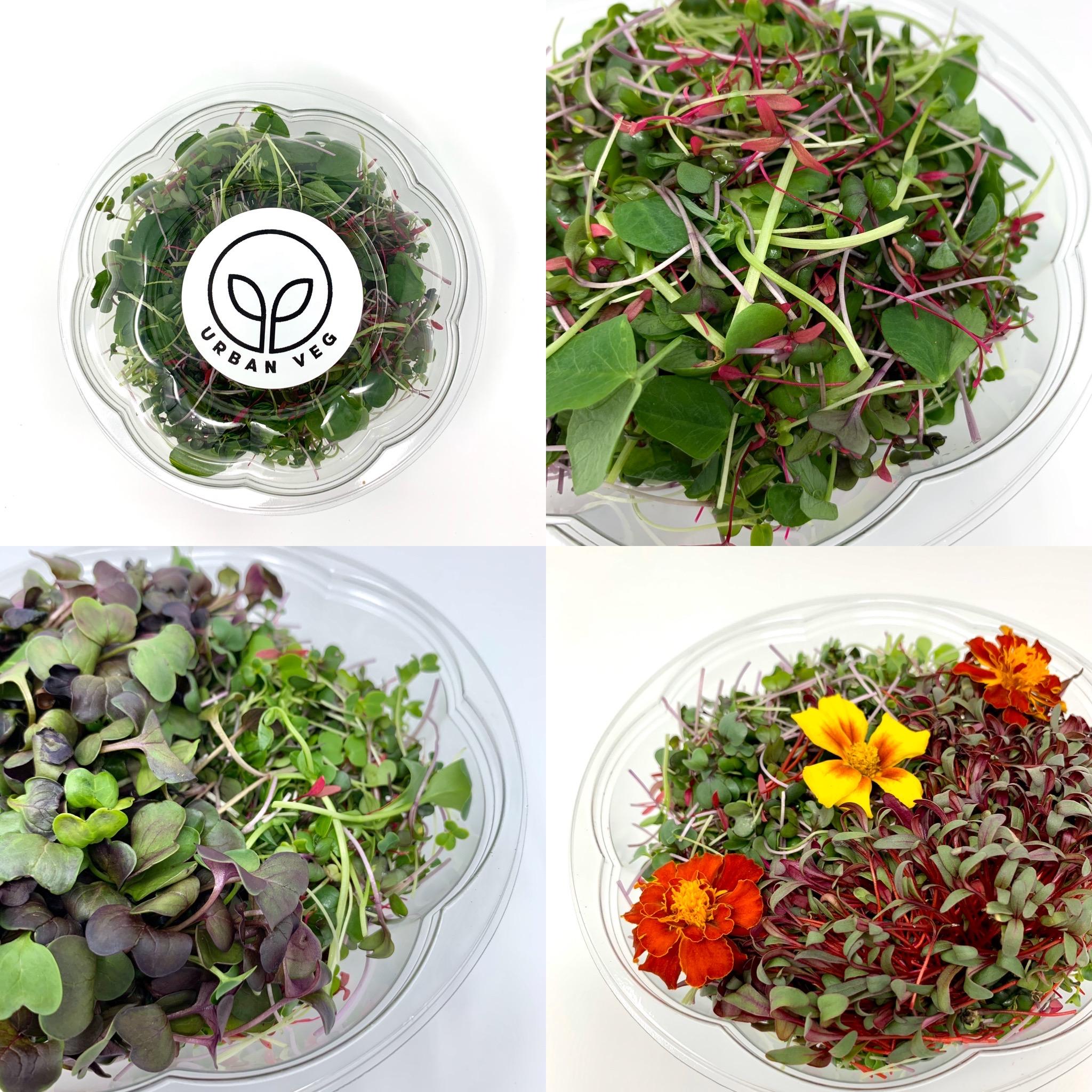 Large Superfood Salad Bowl