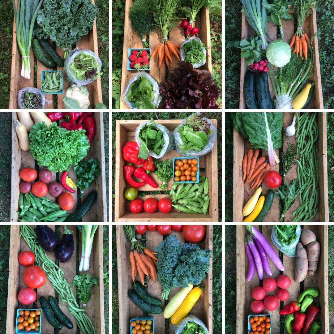 Regular Veggie Box