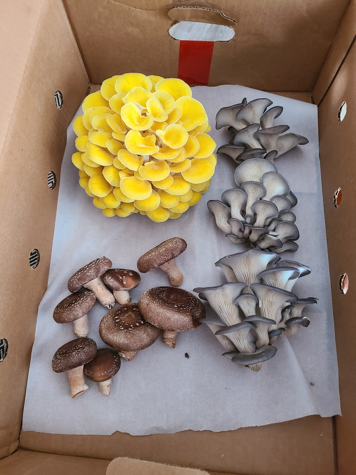 Gourmet Mushroom Share