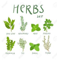 """Garden Herbs: Their Cultivation, Cookery, Cures, and Caveats"""