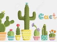 Consider the Cacti