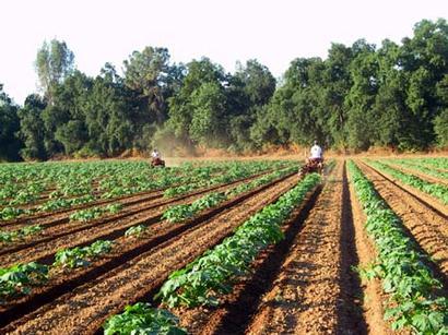 Pumpkin patch bakerafield ca