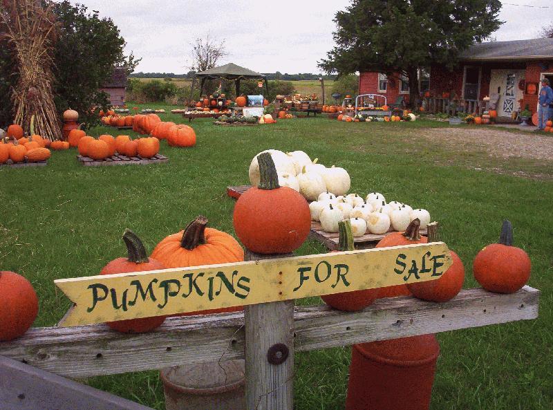 Pumpkin Patch In Spencer, Iowa ? Hawk Valley Garden Pumpkin And Produce  Standu0027s Fall Festival