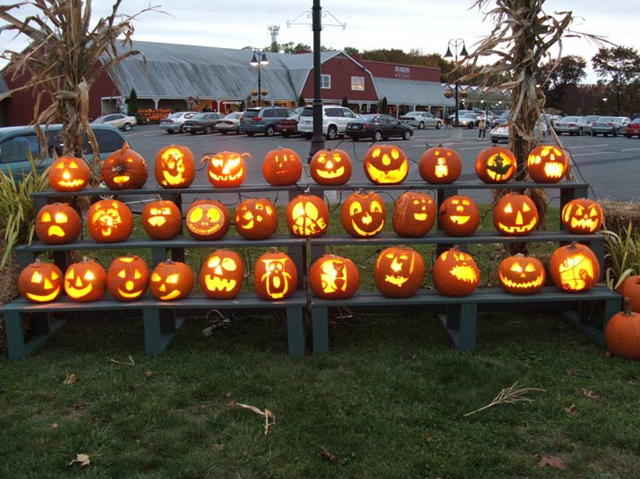 Stokes farm in new jersey was named the best pumpkin patch in nj.